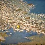 ترکی، پانی کے زیادہ استعمال  نے  ہزاروں مچھلیوں کی جان لے لی