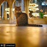 جامع مسجد آیا صوفیہ کی بلی کی صحت بگڑ گئی