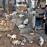 پالتو کتے کی موت کا غم:ترک ریٹائرڈ ملازم نے آوارہ جانوروں کی دیکھ بھال کا بیڑا اٹھا لیا