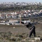 اسرائیل فلسطینی کسانوں سے زمین چھین کر یہودی آبادکاروں کو دے رہا ہے، رپورٹ